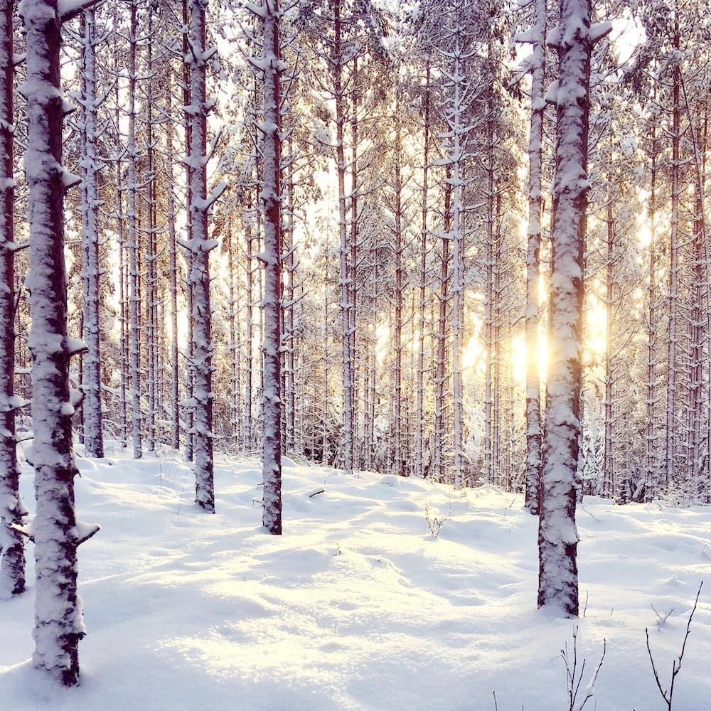 Virkistyspäivä | Lumikenkäily | FoRestful