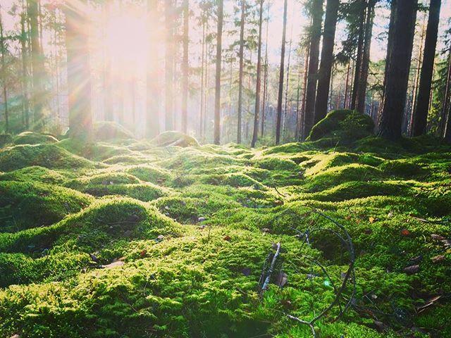 Virkistyspäivä | Metsämieli | FoRestful