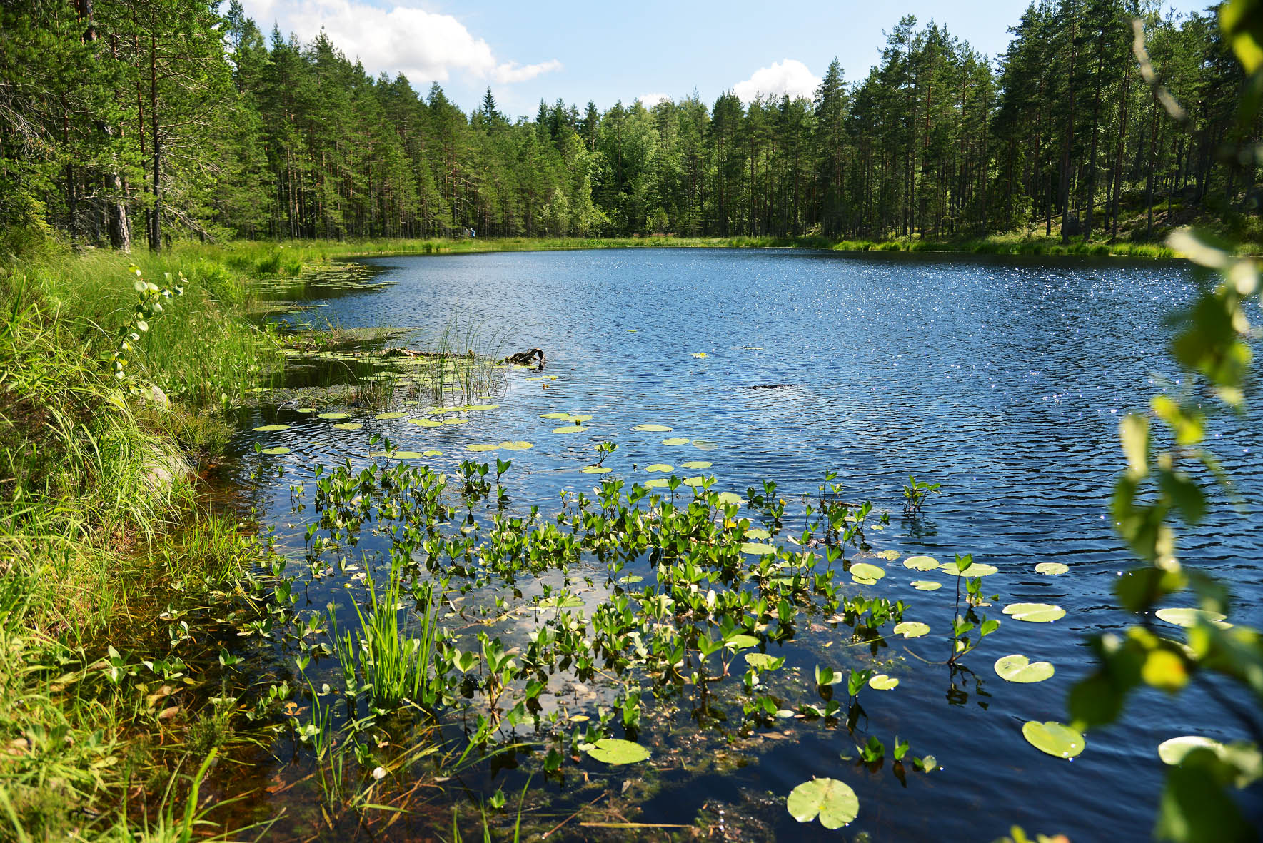 Virkistyspäivä | Luontorentoutus | Forestful