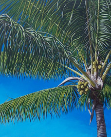 Ft. Lauderdale Palm