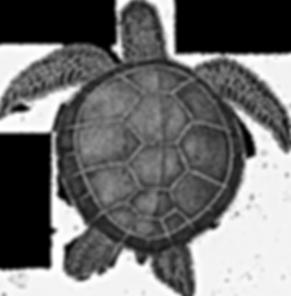 Turtle_edit.png