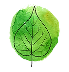 Leaf-Transparent.png