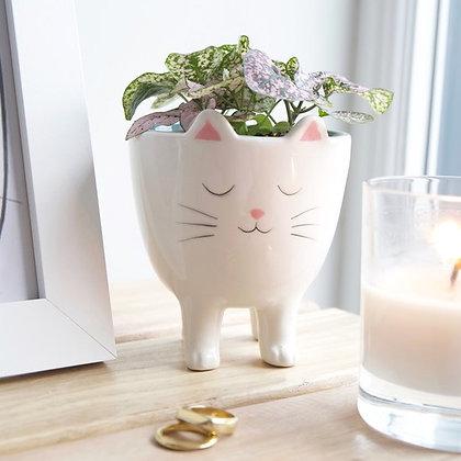 Pot de fleurs «Chat»
