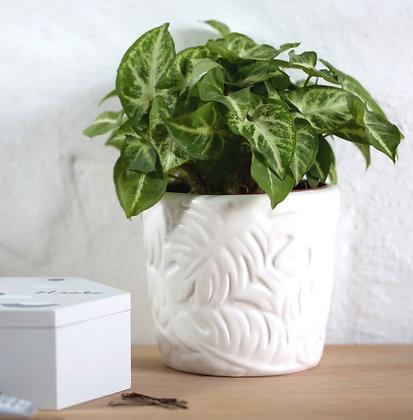 Pot de fleurs «Kio»