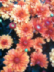 Picture of Flowers on www.africanframes.com