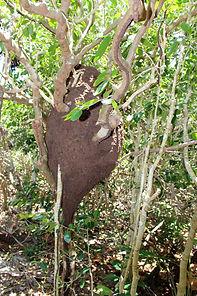 Termite Mounds | Best Hiking on Exuma