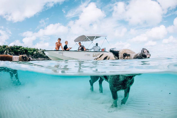 The Swimming Pigs | Best Things to Do in Exuma