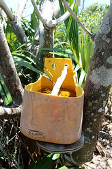 Water station for birds | Best Hiking on Exuma
