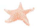 starfish sketch 1 rose gold.png