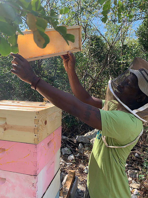 Visit the Bee Apiary at Exuma Foundation | Best Things to Do in Exuma