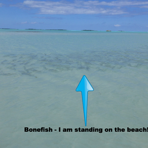 Bonefishing - fun even without a rod