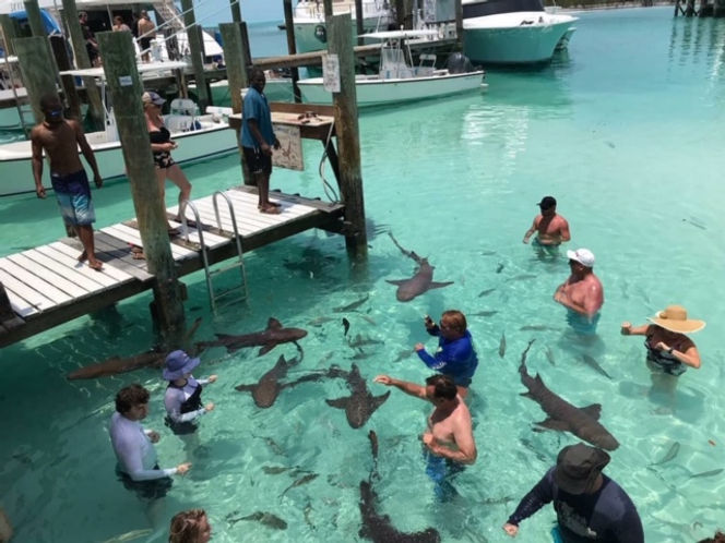 Swim with Sharks | Best Things to Do in Exuma