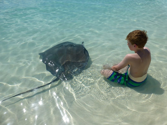 Swim with Stingrays at Chat & Chill | Best Beaches in Exuma