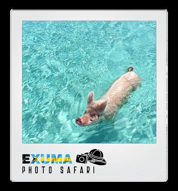 polaroid photo safari 5 FIN.png