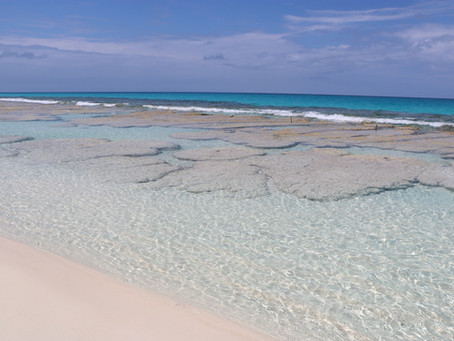 World's oldest living fossils - Stromatolites - Stocking Island, Exuma