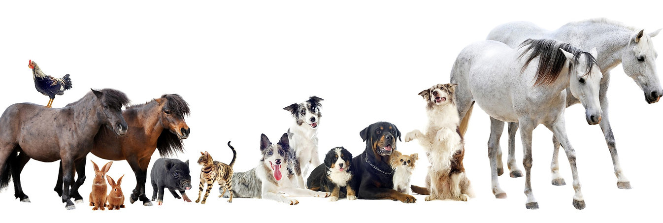Animal care with Aloe Vera