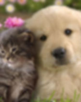 cat&dog.jpg