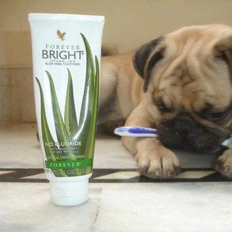 aloe vera forever toothgel animals