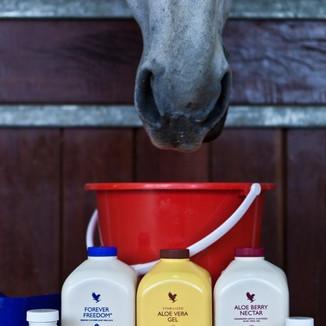 forever living aloe vera gel freedom horses