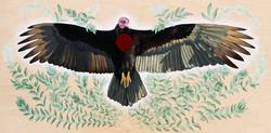 Turkey Vulture Is Honoured