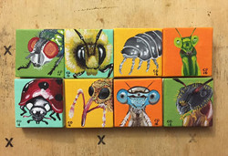 Insect Portraits