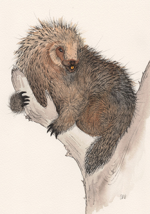 Porcupine in the Tree