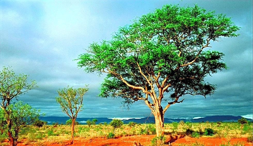 730719-africa_edited_edited.jpg