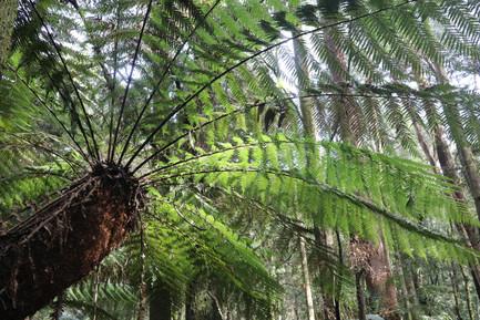 Forest in Western Tasmania