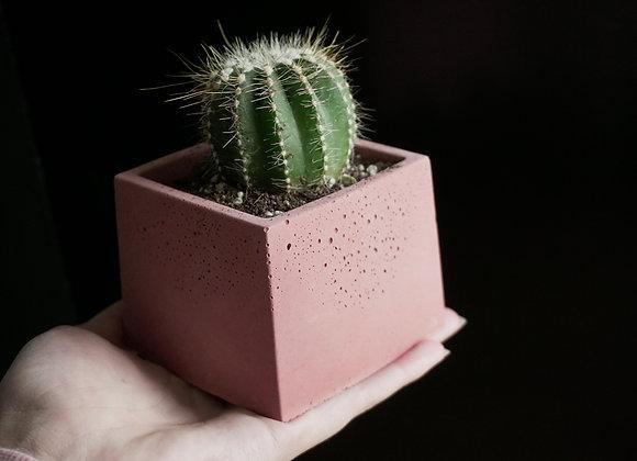 Small Square Planter