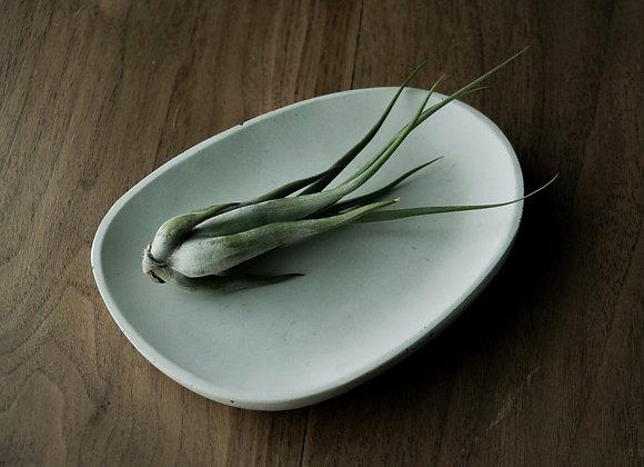 Small Organic Concrete Dish