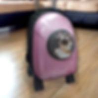 Transportadores, mochilas y bolsos para gatos