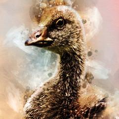 Gosling Watercolor2.jpg