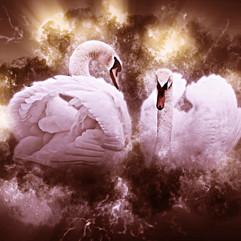 Swans In LovePrint.jpg