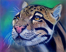 Clouded Leopard Pastel Pencil Drawing