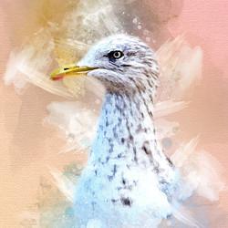 Seagull Watercolour design