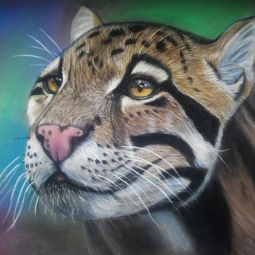 Clouded Leopard Pastel Pencil Original Drawing