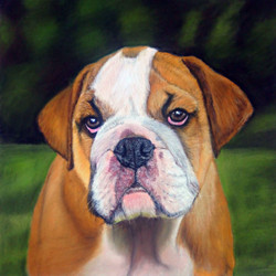 Bulldog Puppy Pastel Drawing