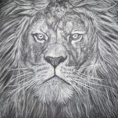 LionRachelMaytumMUG.JPG