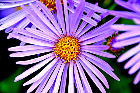 Purple+flowers.jpg