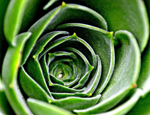 Inside+cactus.jpg