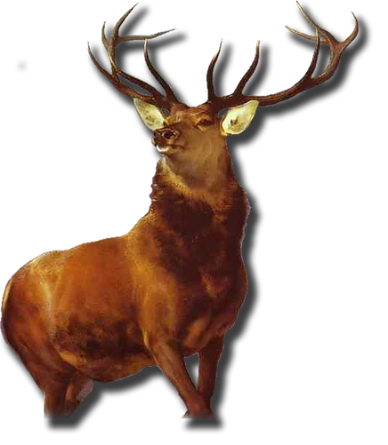 cerf png.png