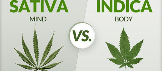 Sativa VS Indica - Which is best for me?