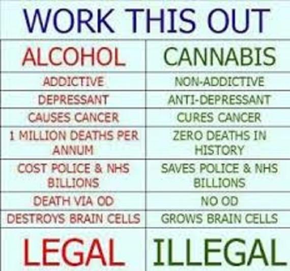 cannabisinfo.jpg