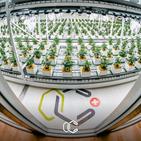 Grown Your Own Cannabis in Switzerland