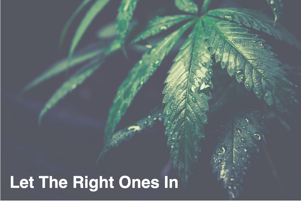 Cannabis, Technology, weed, marijuana, cannabusiness,