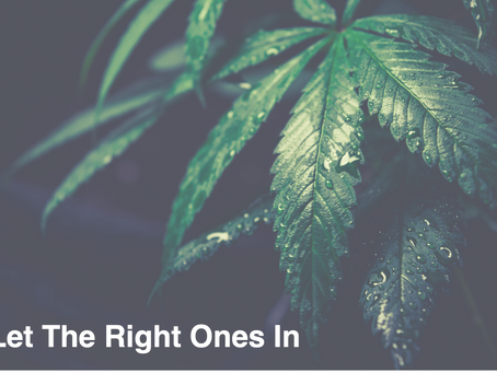 From The Cannabis Diaries #2: Let The Right Ones In