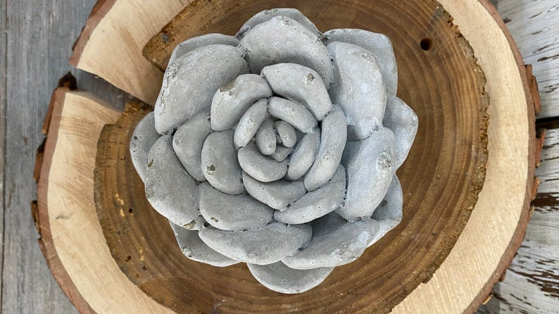 Cement Succulents - Available in Two Sizes