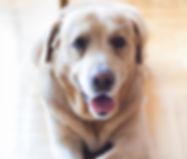 dog-792124_1280.jpg