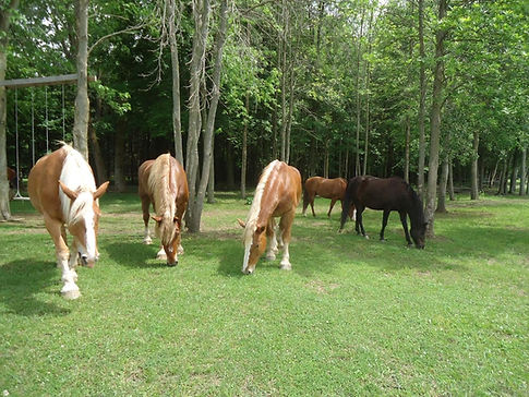 Horse herd in the Oasis at Spirit's Whisper Ranch