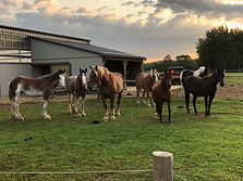 Barnyard and horses at Spirit's Whisper Ranch